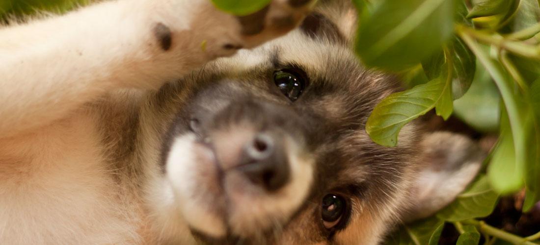 Friendicoes-Desi-Dog