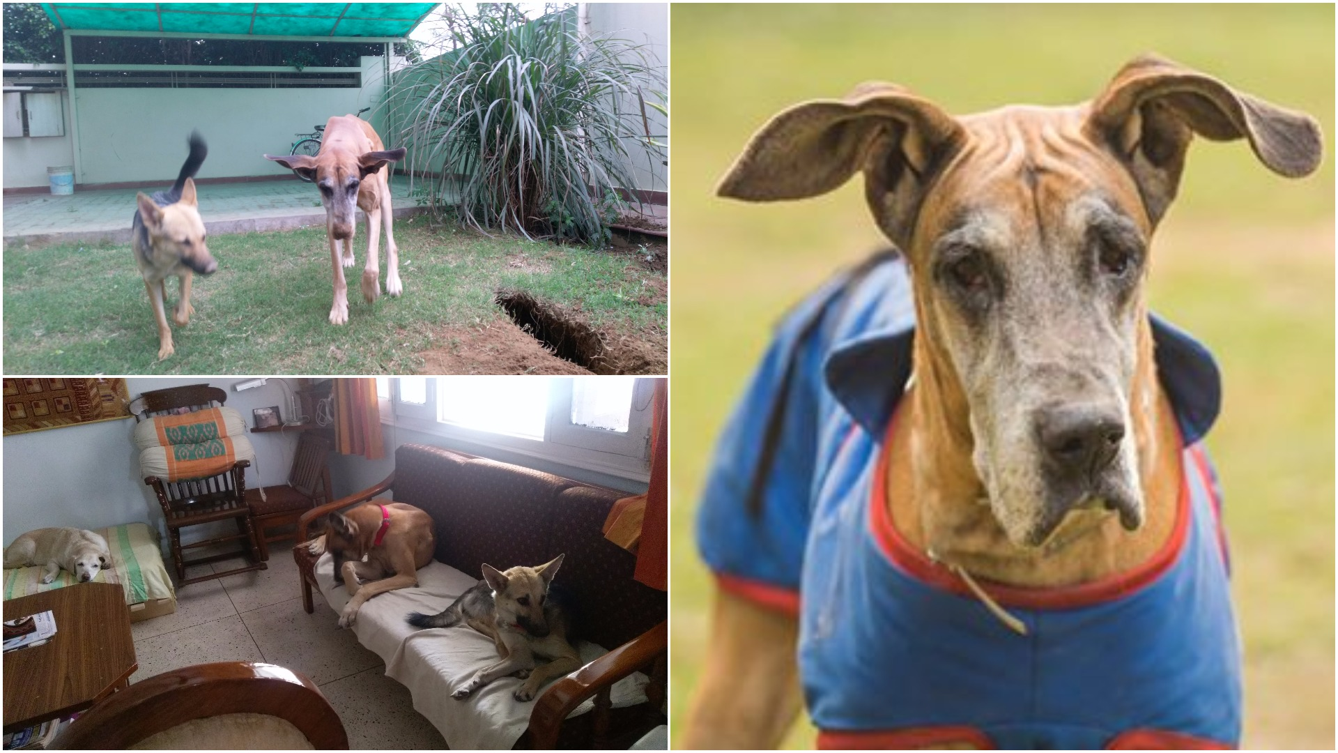 clockwise from right: Heidi at the shelter; Heidi and her housemates did not get along initially; Heidi and bano, sworn enemies, bond against a common enemy; grass.