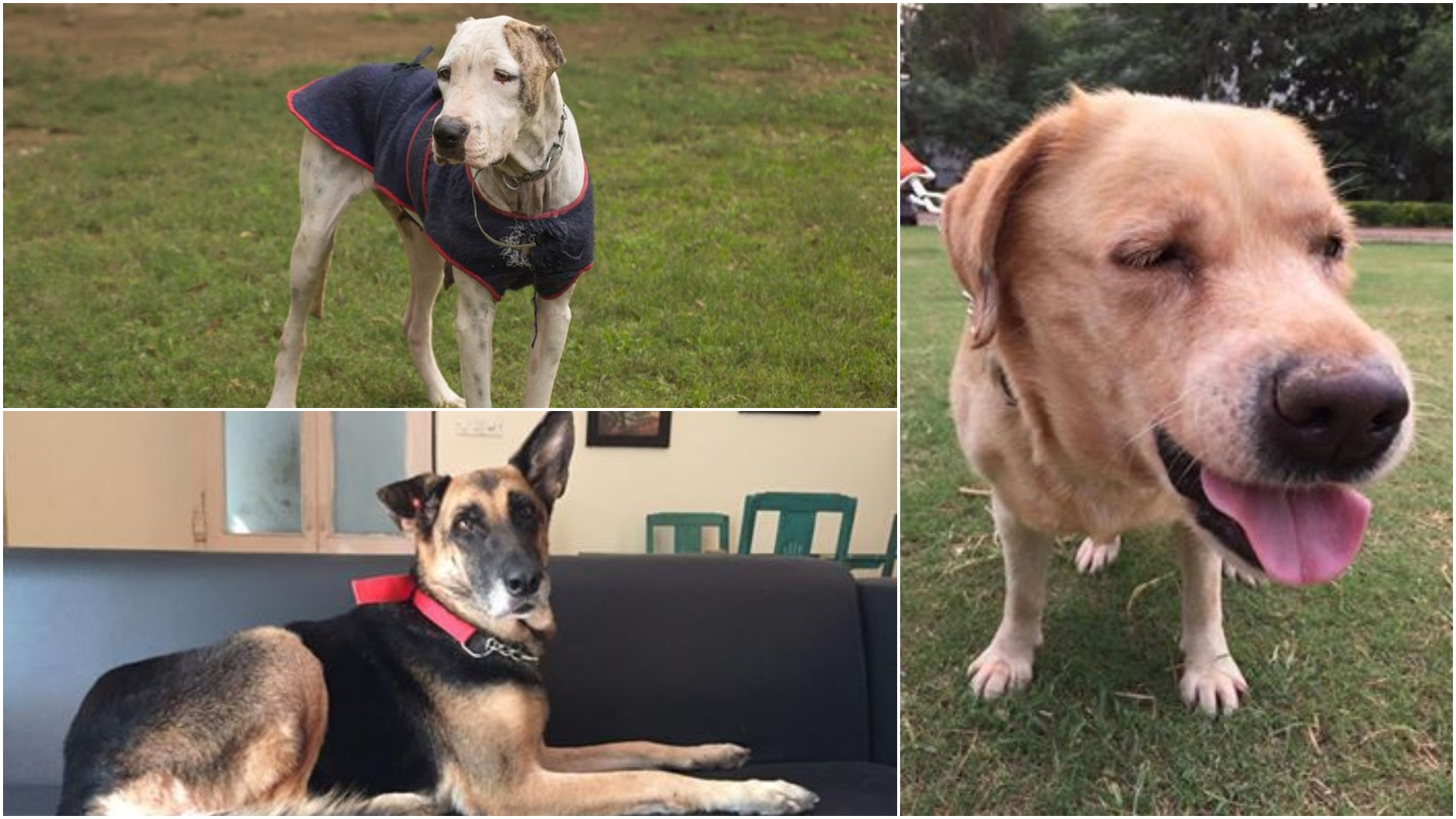 Looking for homes: (clockwise from right) Chia(7-8yrs), Lara (7yrs), Lady(4-5yrs).