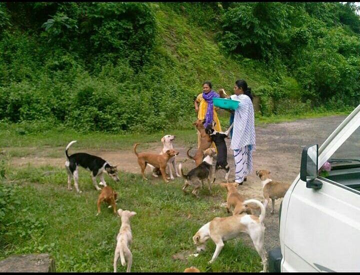 SPAY/NEUTER IN THE ANDAMAN'S